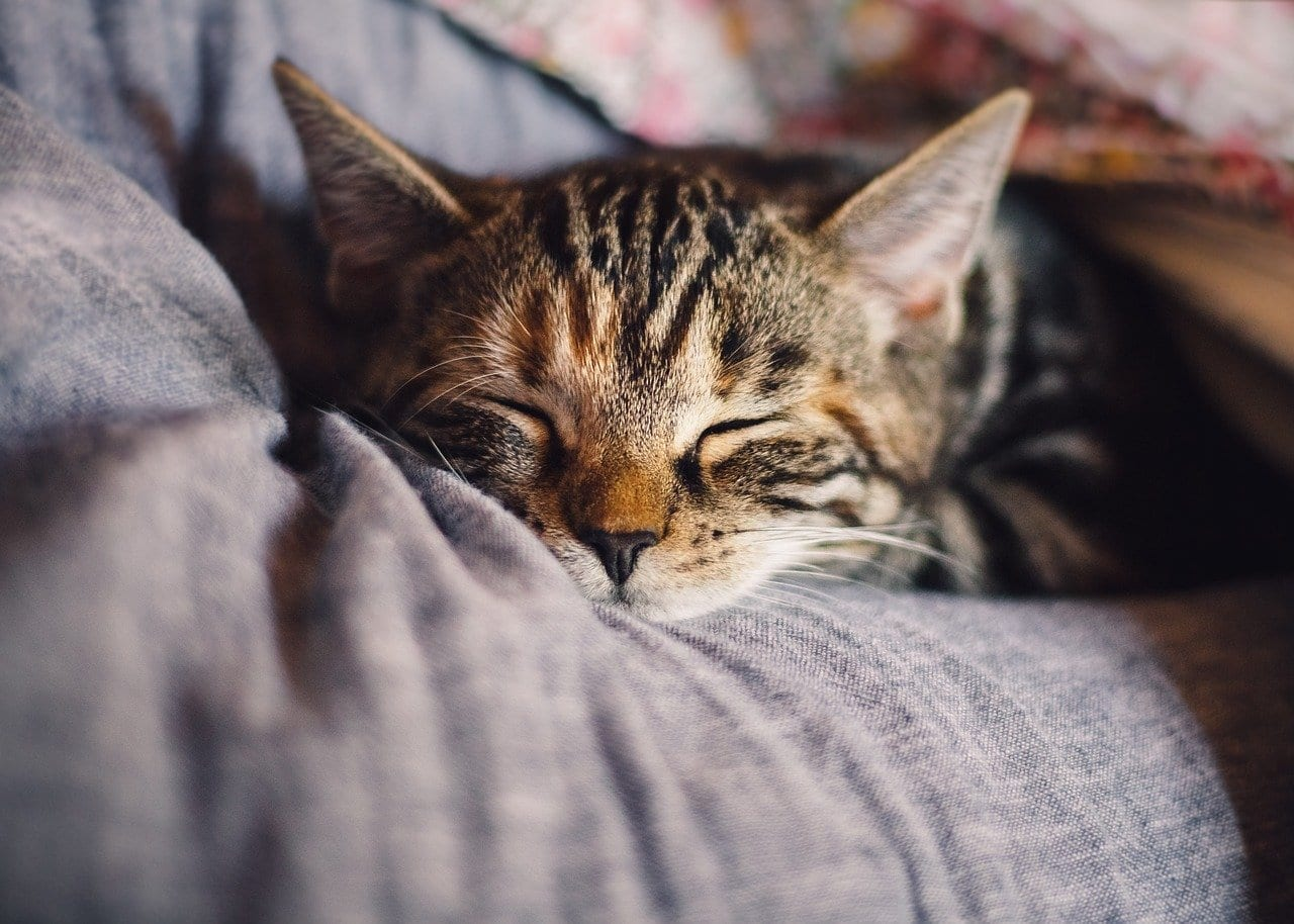 cat napping after pet wellness plan visit